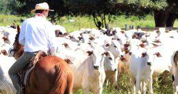 administracao-de-fazendas-de-bovinocultura-de-corte-conheca-os-pontos-chave