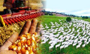 agricultura-ou-pecuaria-escolha