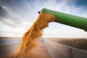 Umidade-do-milho-para-colheita